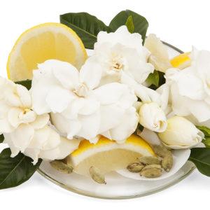 Elegant Gardenia